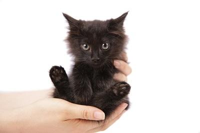 手の上の仔猫