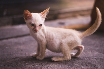 痩せている猫