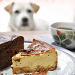 犬に絶対与えてはいけない食品「チョコレート」なぜ危険なの?中毒症状は?