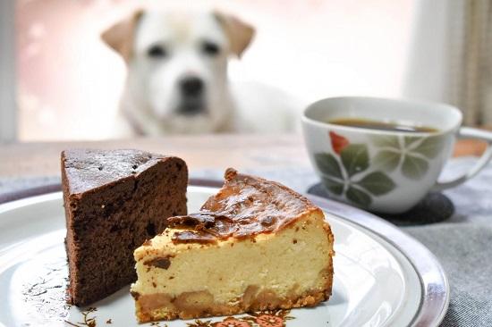 犬とチョコレートケーキ