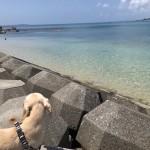 ペットと沖縄旅行!おすすめシーズンは?移動手段は?