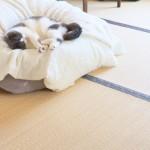 冬に大活躍!あったか素材の猫用ベッド4選☆