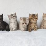 吾輩はどんな猫かニャ?気になる猫の性格診断☆猫の性格は毛色や長さでわかる?父猫の性格や子猫時代の環境にも関係が!?