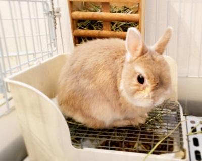 トイレするウサギ