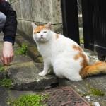猫のTNRの費用って誰が負担するの?補助制度はある?
