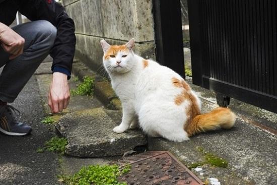 人なつっこい野良猫