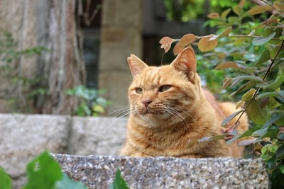 耳先カットされた地域猫