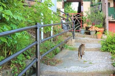 尾道・猫の小径