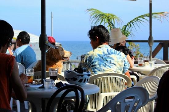 浜辺のカフェで愛犬とのひと時