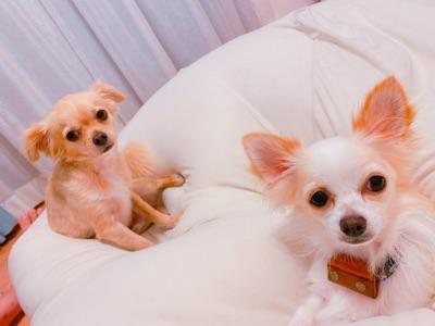 いつも一緒な犬先住犬と保護犬