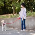 目が見えない犬との散歩ってどんな感じ?盲目犬とのお散歩を楽しむための注意点やコツ☆
