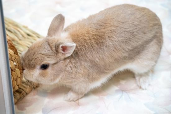 遊んでいるウサギ