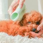 タングルティーザーの子犬用ブラシ「ペットティーザー パピー」が新発売!早速使ってみた!