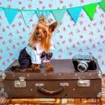 犬と沖縄旅行を楽しむために事前に準備しておきたいものと現地調達できるもの