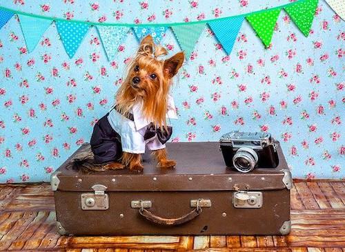 犬と沖縄旅行に必要な持ち物