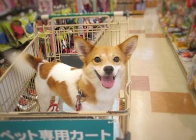 お買い物 嬉し楽しー♪
