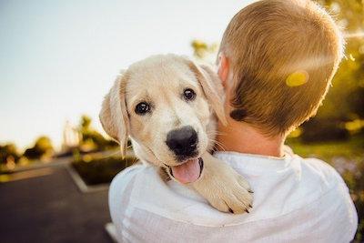 少年に抱っこされる犬