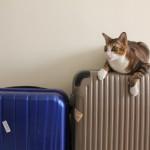 猫連れ沖縄旅行!猫を飛行機に乗せるための予約・手順・準備するものまとめ