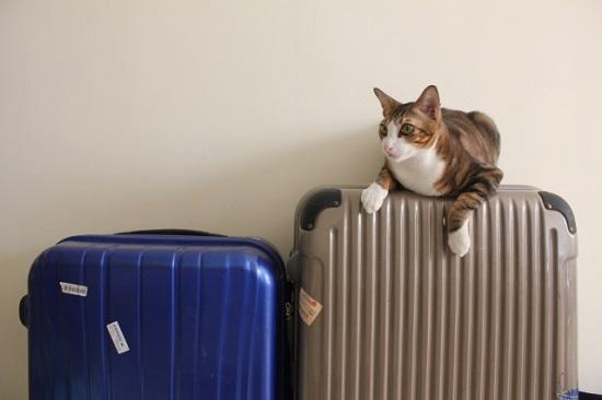 トランクの上に座る猫