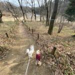 東京で愛犬と子どもが楽しく遊べる場所、ない?おすすめは、町田市にある小山田緑地!