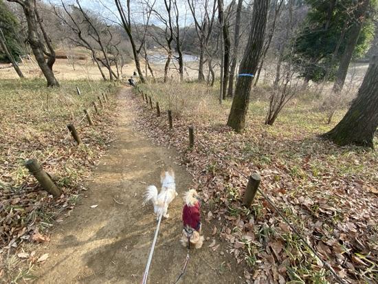 小山田緑地をお散歩