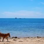 愛犬と沖縄旅行!冬の沖縄の見どころ&楽しみ方4選