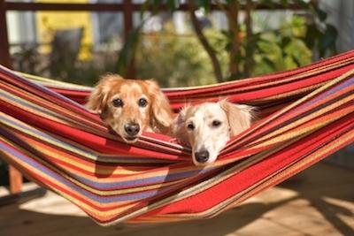 犬とキャンプ